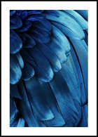 Blue feathers Poster